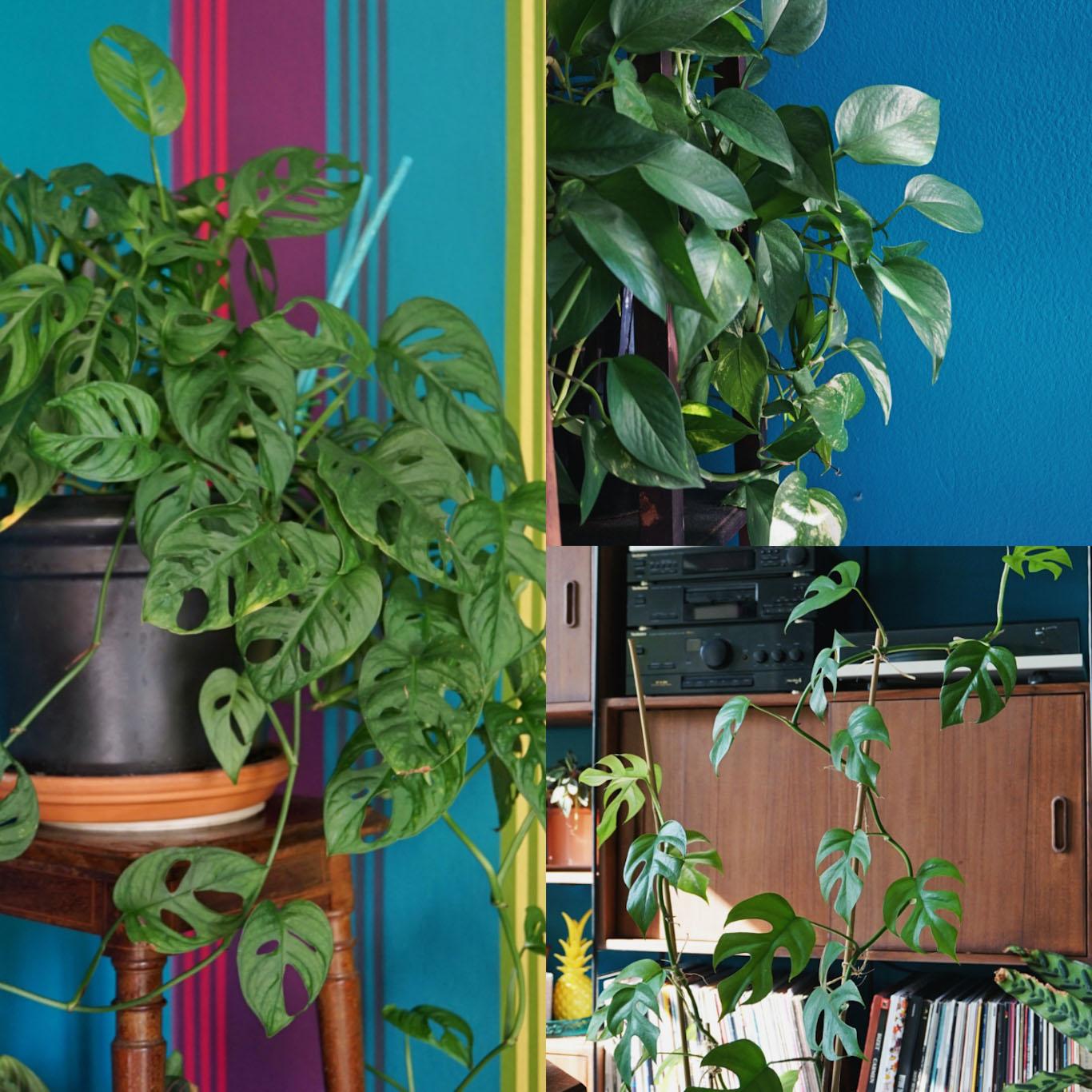 calva plant swap - la loggia di calvairate - talee facili da fare a casa